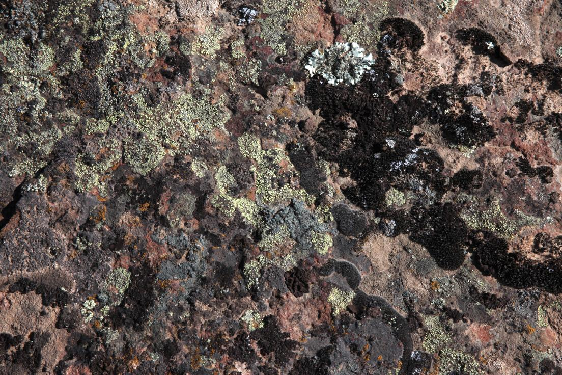 Basalt mound lichen near Palouse Falls in Eastern Washington, USA.
