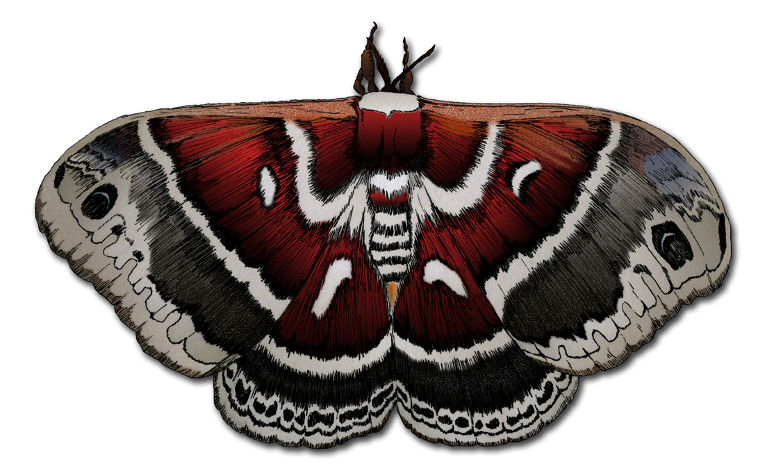 Illustration of a moth.