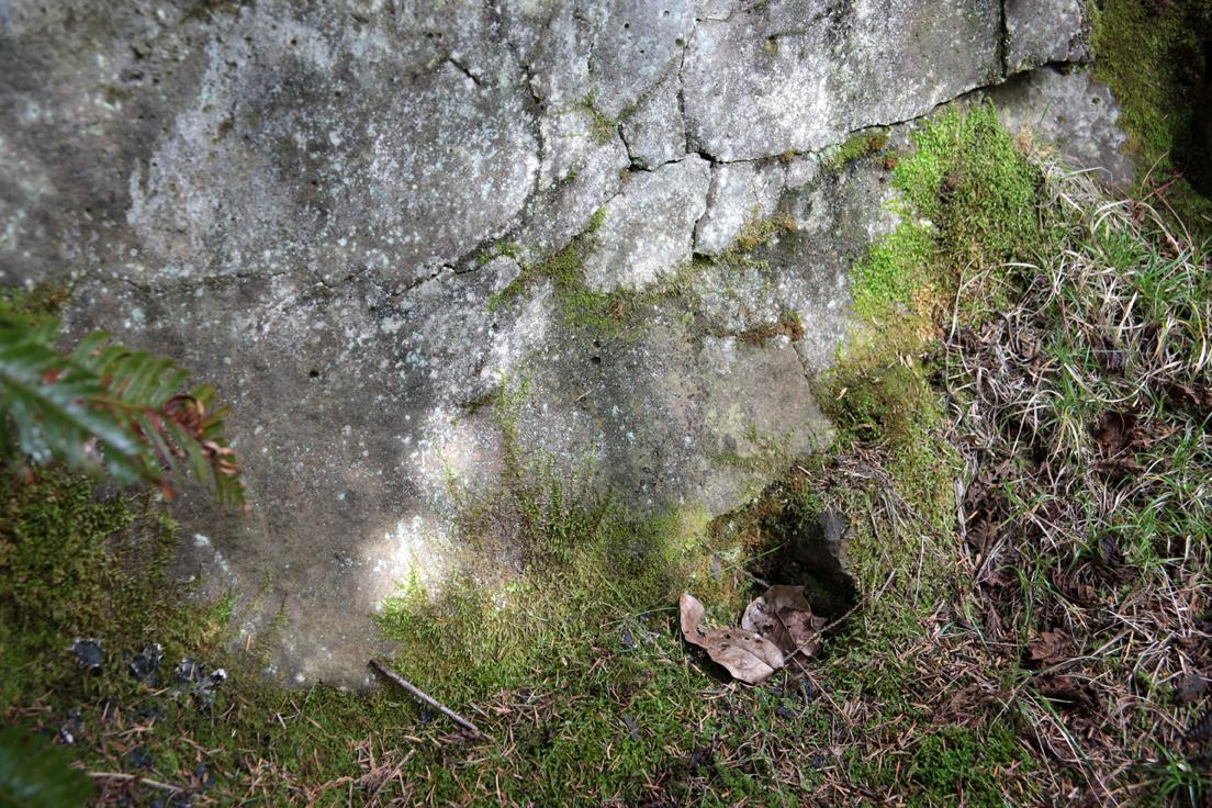 Base of stone cliff face with moss.
